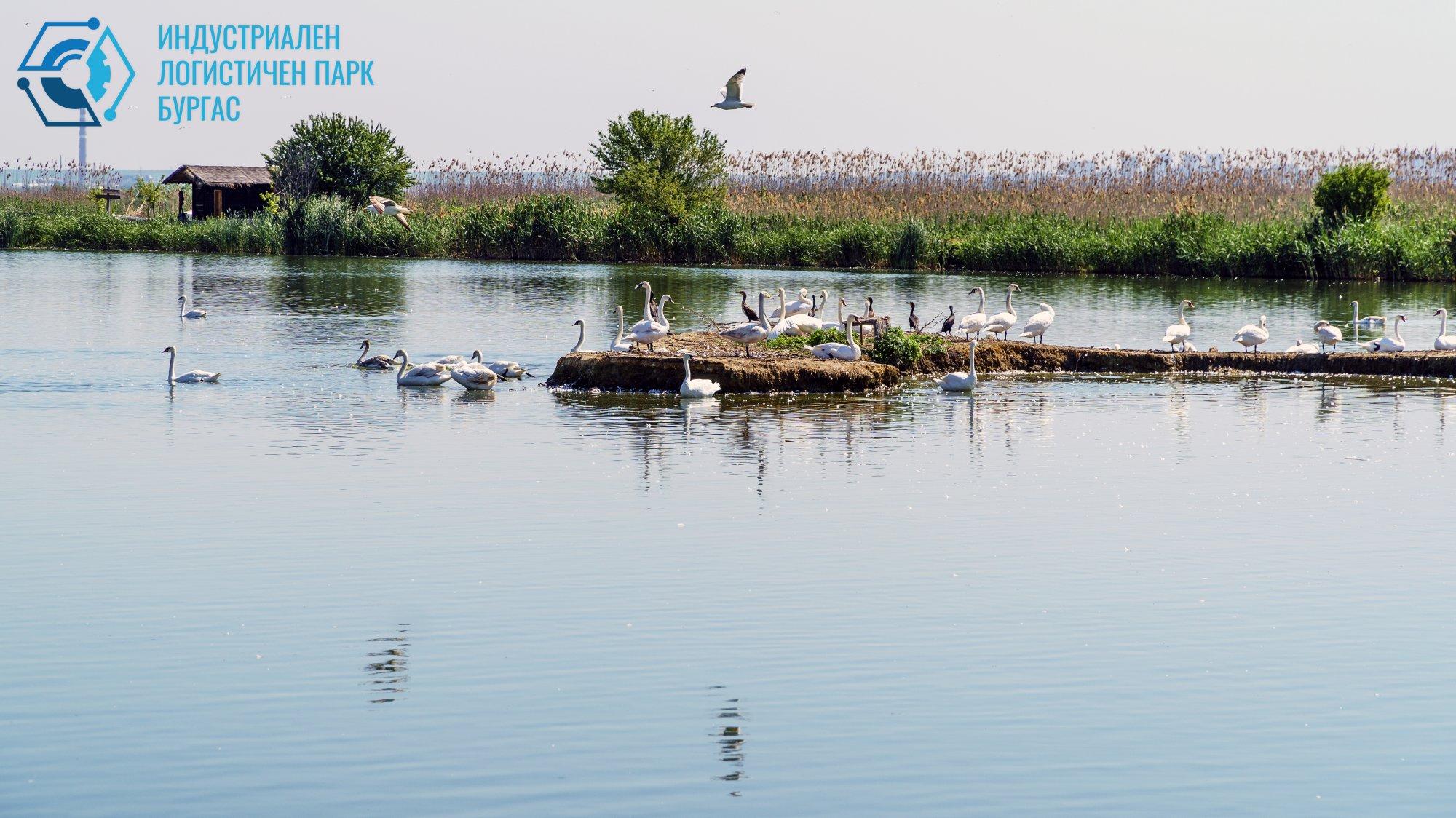 Съжителство - птици, езеро, природа и индустрия
